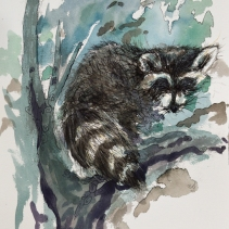 Scurry In a Hurry (Raccoon)