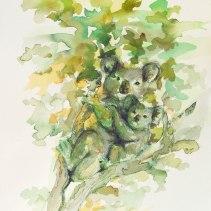 Kozel (Koalas)