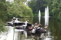 The ducks in Vondelpark