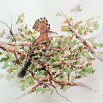 hoopoe (bird)